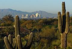 Phoenix, Panorama - Skyline (blafond) Tags: morning cactus panorama phoenix skyline downtown matin