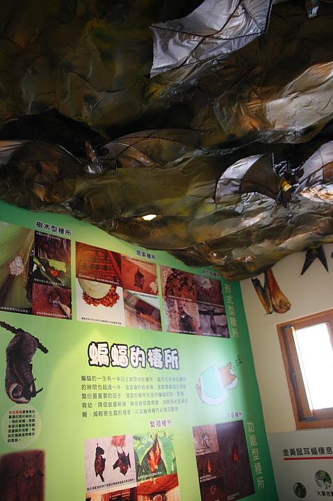 雲林水林黃金蝙蝠生態館(誠正國小)0008