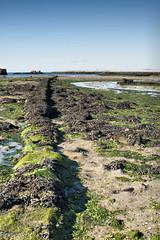 Playa de Cambados (Perurena) Tags: beach mar sand playa arena galicia pontevedra algas riasbajas cambados oceanoatlantico salnes marisqueo riadearosa