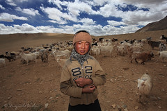 The Changpa of Ladakh (Sayid Budhi) Tags: portrait culture nomad himalaya ladakh younggirl northindia ladakhi northernindia peoplephotography changpa nomadicgirl nomadictribe herdinggoats changpas humanphotography himalayamountain girlherdinggoats changpaofladakh ladakhichangpa changtangplateu