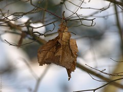 A cold, cold winter day (Rick & Bart) Tags: winter snow nature leaf bokeh sneeuw natuur blad rickbart rickvink