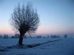 Day 7 (Cesare Nicola) Tags: morning snow tree gelo sunshine frozen alba neve albero febbraio project365 progetto365 httpcesare365posterouscom
