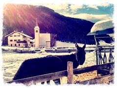Durnwald (fratella) Tags: winter italy snow italia hiver neve neige inverno alto italie adige suedtirol gsiesertal provinciadibz valledicases