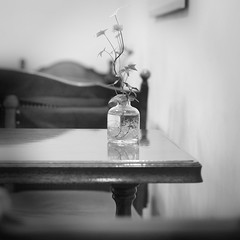 On The Table (marco ferrarin) Tags: blackandwhite bw green glass wall table leaf chair onthetable stilllifephotoart