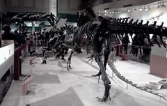 Dinosaurs (uhhey) Tags: dinosaurs