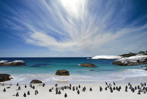 Thumbnail from Boulders Beach