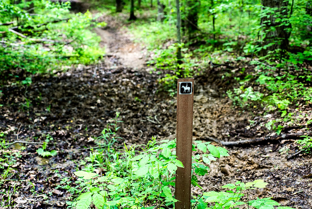 Charles C. Deam Wilderness - Grubb Ridge Trail - May 21, 2016