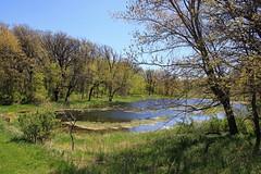 Woodland Pond . . . (doc030395) Tags: county leaves spring pond woods hiking iowa frogs winnebago korthsmeadow