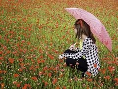 Poppies and rain (Lumase) Tags: portrait rain umbrella spring poppies irene poppyfield