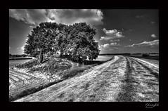 Begraafplaatsje Hardenberg (Jodenbergje) (Fred Christoffels) Tags: clouds canon mono blackwhite wolken sigma begraafplaats kerkhof hardenberg sigma1020 canon60d