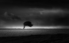 Dead Wood (vulture labs) Tags: tree silhouette dark landscape moody silence vulturelabs