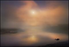 The Hunter (adrians_art) Tags: sky cloud mist water birds silhouette fog sunrise reflections golden riverbank grayheron