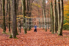 Autumn Forest II (DolliaSH) Tags: autumn trees holland color tree fall colors leaves forest canon carpet photography photo europe foto photos herbst herfst nederland thenetherlands 7d 70200 veluwe gelderland bladeren canonef70200mmf4lisusm leuvenumsebos canoneos7d dolliash dolliasheombar