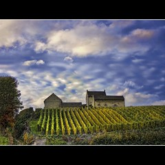Dutch wine (Wim K) Tags: autumn sky holland color colour netherlands clouds yard canon maastricht landscape photography photo vineyard wine path stock nederland powershot footpath wineyard limburg stockphoto stockphotography jekerdal wpk s95 wpk2