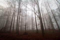 Herbstimpressionen 111128 (Bianchista) Tags: herbst impression mardorf biachista