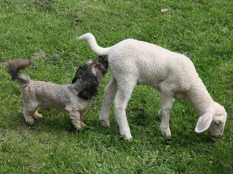 Ferienwohnungen Selz - Lamm und Hund