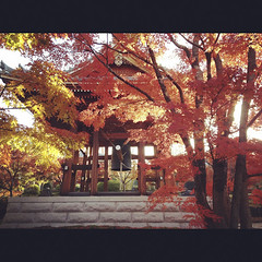 Beautiful morning (yocca) Tags: morning autumn red leaves japan temple kyoto 100v10f momiji japanesemaple  botanic  4s iphone 2011 chishakuin   instagram dec2011