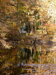Autumn Reflections (robertvena) Tags: autumn trees lake fall colors leaves forest woods seasons seasonal foliage