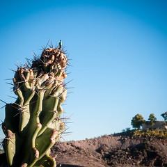 (PVignau) Tags: cactus littlepeople sd300 phoenixaz 2011 bonshommes vimages