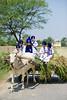 Tending the Future (gurbir singh brar) Tags: india boys kids uniform future sikh punjab newgeneration punjabi turbans khalsa villagescene bullockcart goingtoschool nihang gurbirsinghbrar