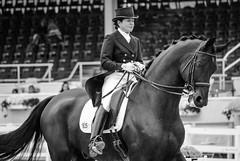 Sasha Newman Dubois on Rossini 234 (Jen MacNeill) Tags: test horse freestyle grandprix pa riding devon equestrian canter macneill dressage warmblood dressageshow devonhorseshow dressageatdevon gypsymarestudios jennifermacneilltraylor