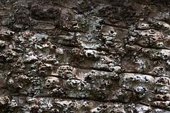 Textures (Deb Jones1) Tags: macro green nature beauty canon garden outdoors 1 jones flora explore deb flickrduel