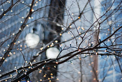 city lights (thisemily) Tags: christmas city blue trees white lights holidays december bokeh detroit explore string 50mmf18