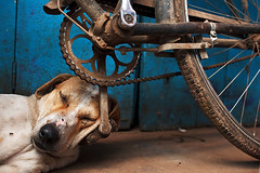 Sleeping dog - Varanasi, India (Maciej Dakowicz) Tags: street city sleeping dog india animal bike bicycle asia nap sleep pillow varanasi asleep kashi pedal sleeper benares uttarpradesh