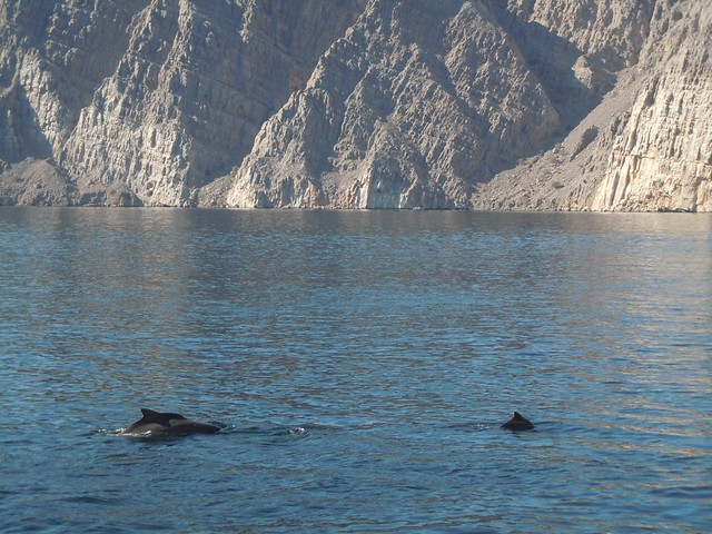 Dolphins in the STRAIT OF HORMUZ