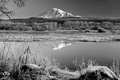 Trout Creek (Chris Ross Photography) Tags: mountain snow reflection water creek washington weeds adams northwest trout pnw h20