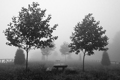 _MG_2719 (Dany_79) Tags: trees winter fog eos asturias niebla tineo blackwhitephotos xti