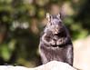 Got any more peanuts? (Terry Demczuk) Tags: ontario canada nature animal club canon eos amazing squirrel wildlife elite xs brampton ardilla terrydemczuk