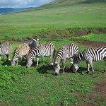 "Zebra <a style=""margin-left:10px; font-size:0.8em;"" href=""http://www.flickr.com/photos/14315427@N00/6605156699/"" target=""_blank"">@flickr</a>"