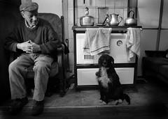 Tony and Prince (killydoon) Tags: ireland dog man rural silver prince teapot