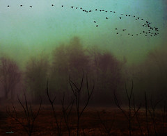 .....going home..... (xandram) Tags: trees sky mist nature field photoshop geese flight manipulation bestcapturesaoi