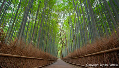 Bamboo Forest v2 (Dylan Farrow) Tags: japan forest evening kyoto bamboo hdr pixelpost flickrpost 60d