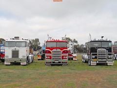 photo by secret squirrel (secret squirrel6) Tags: classic trucks bobtail secretsquirrel kenworth echuca cabover truckshow