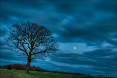 007-366 Berners_Roding_Moon_Rise.jpg (Mark Seton) Tags: winter moon tree oneaday nikon moonrise photoaday essex hdr pictureaday d60 project365 uttlesford bernersroding project3657 project365070112