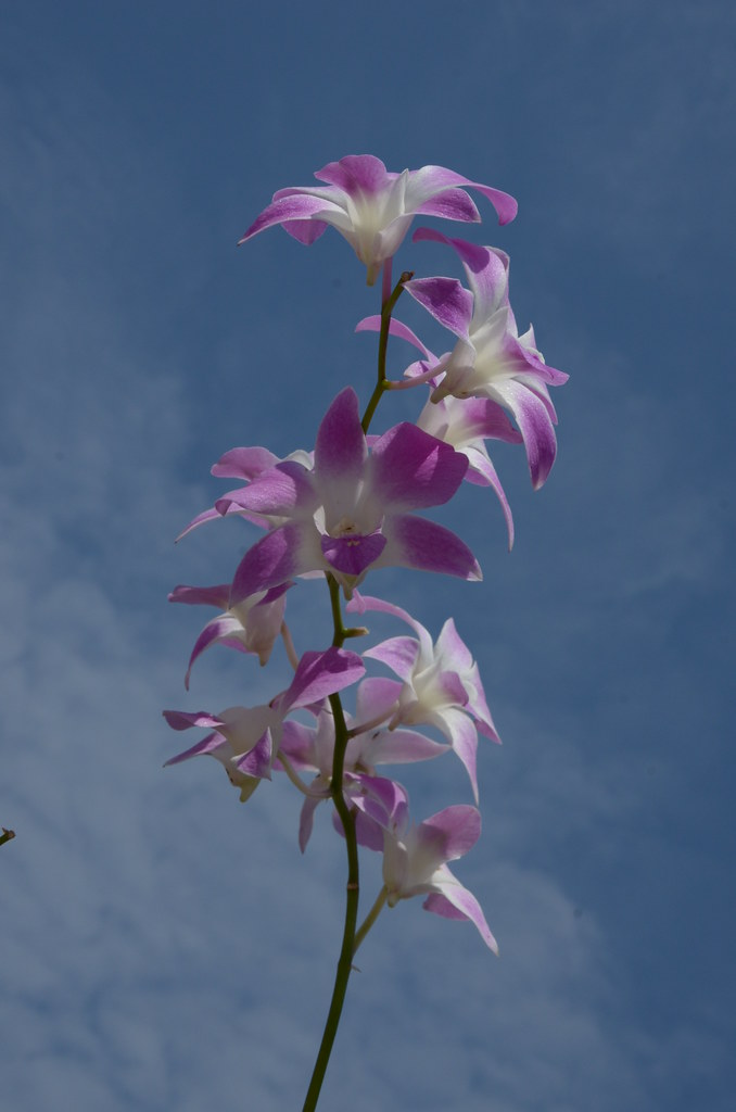 фото: Orchid