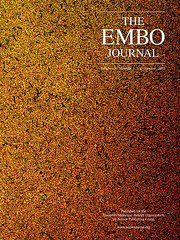 Our ratiometric E coli in the cover of EMBO Journal (Fernan Federici) Tags: red green magazine gm gene uv journal science fluorescent e bacteria genetics protein microscopy embo coli gfp escherichia