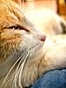 Carabassí II (Juan Antonio Capó) Tags: animal cat kat feline chat fuji gato felino katze mace 猫 gatto kot gat kočka kedi kissa köttur mačka kucing x10 pusa mèo moix گربه кошка 고양이 minino γάτα мачка котка pisică แมว قط кішка 잭 קאַץ िल्ली fujifilmx10 fujix10 חתולվալետ