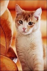 Kaboodle (K. Sawyer Photography) Tags: wood cat kitten pillar