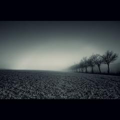 Fog Bow (C Owen) Tags: trees mist field fog germany deutschland halo fogbow