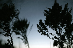 (epine) Tags: life blue sunset sun me its silhouette canon lens photography like days goodnight be what 5d 24 28 bryant 70 hue scannell epione