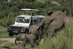 Elephants, Tarangire NP, Tanzania (Zul Bhatia1) Tags: africa baby elephant tanzania mammal wildlife zul np tarangire bhatia zulbhatiacopyright