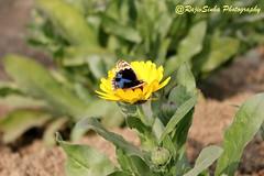 Flower 1 (RajivSinha Photography) Tags: flower butterfly photography rajivsinha rajivsinhaphotography