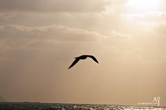 Flying Freedom (Aamir Jaffar) Tags: trees sea sky food man bird eye girl skyline clouds flying dubai uae eat seabirds tallestbuilding burjkhalifa seantportrate