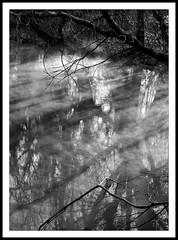 Dampfender Bach   3 (petra.foto busy busy busy) Tags: wasser nebel bach bäume schwarz weis wasserdampf flus