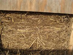 Slip straw cob wall_4630892782_l