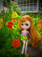 Day in the Garden